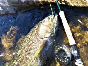 2013 Fall Salmon